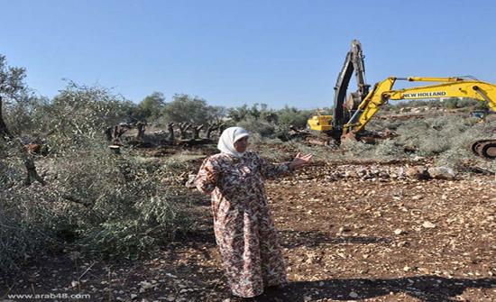 مستوطنون يهود يسرقون ثمار الزيتون من المواطنين غرب نابلس