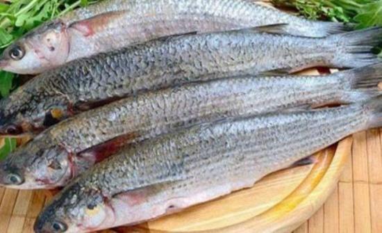 هيئة مصايد البحر الابيض المتوسط تضع تدابير لادارة مصائد الاسماك