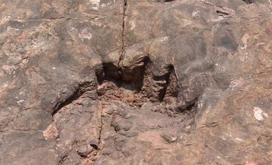 اكتشاف حفريات لأقدام ديناصورات تعود لمئة مليون سنة شرقي الصين