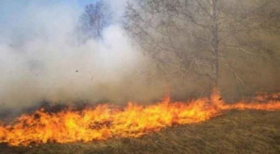 عجلون: وزيرا البيئة والزراعة يتفقدان مواقع متضررة من الحرائق