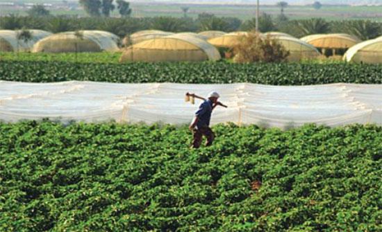 الحياري : الحكومة تستجيب لمطالب المزارعين قريبا
