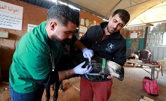 مستشفى فلسطيني للحمير المشردة - فيديو