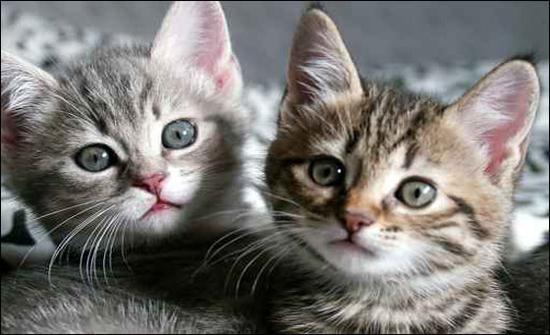 شاهد : بالصدفة.. قطتان تتلاعبان بالظلال
