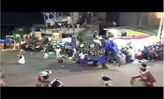فيديو : ساعات الرعب في سيرلانكا.. أفيال تدهس المارة