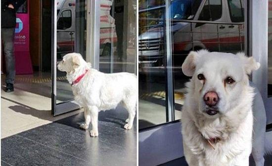 تركيا : كلبة تنتظر صاحبها المريض أمام المستشفى 6 أيام