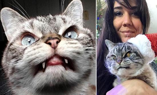 بالفيديو : قطة دراكولا تجتذب آلاف المتابعين بأنيابها البارزة