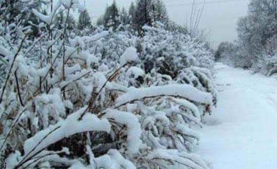الأرصاد الجوية: زخات ثلجية غدا على المرتفعات التي تزيد عن 1100 متر
