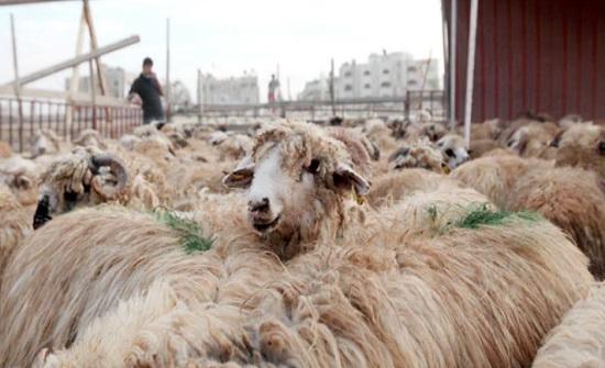 2041 أسرة تستفيد من مساعدات البر والإحسان خلال عيد الاضحى