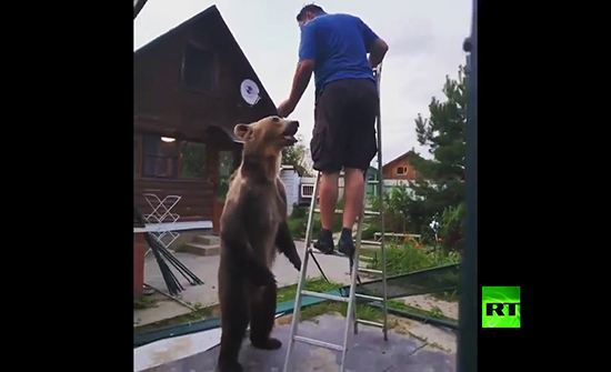 شاهد : دب يداعب صاحبه في حركات حميمية طريفة في روسيا