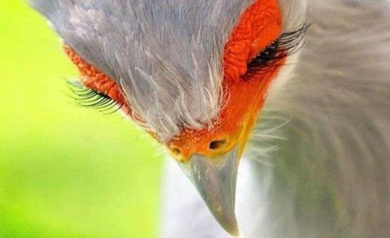 صور جميلة لمجموعة من الحيوانات