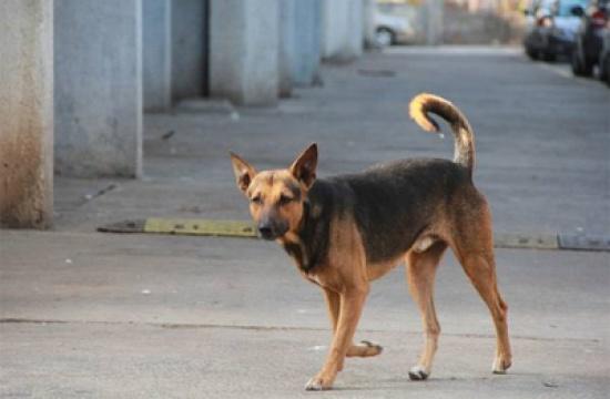 وفاة طفل نهش كلب ضال جسده بالسعودية