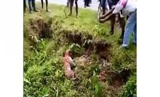 بالفيديو : نمر يهاجم رجلا حاول التقاط صورة له