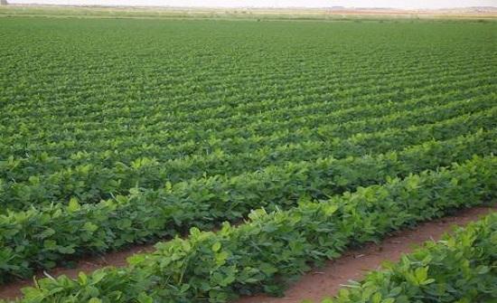 خطر بشري يهدد المحصول الزراعي للعالم