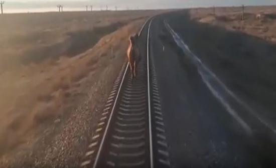 """""""جملٌ عنيد"""" يتسبّب بتأخير رحلة قطار لساعة! (فيديو)"""