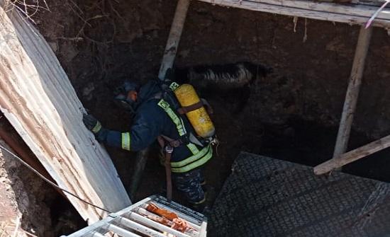 بالصور  :إنقاذ رؤوس أغنام سقطت داخل حفرة في اربد