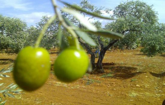 حملة لزراعة الأشجار المثمرة في العقبة