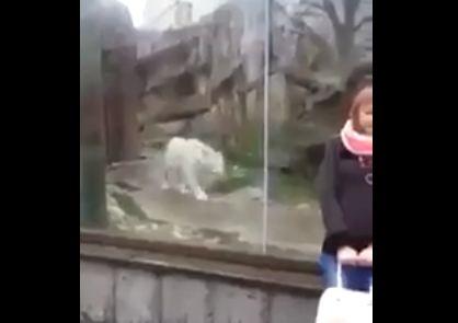 لحظة هجوم نمر أبيض على فتاة (فيديو)