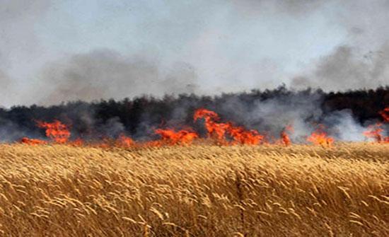 عجلون: اخماد حريق 300 دونم