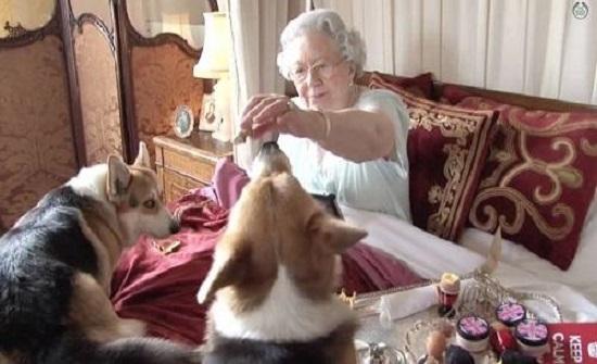 أخر دلع.. كلاب الملكة إليزابيث - صورة
