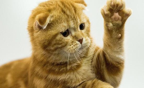 قطة تقتحم حفلا موسيقيا للاستماع لتصبح بطل الحفل... فيديو