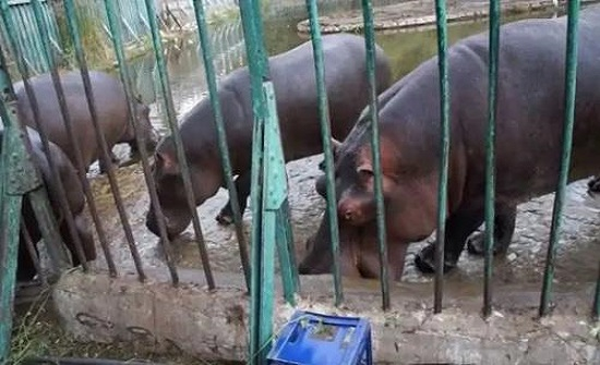 مصر: توزيع مثلجات على حيوانات الحدائق