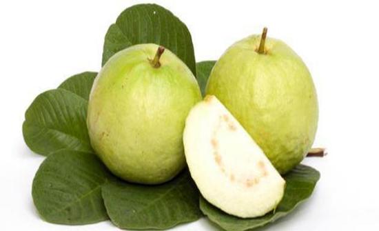 فوائد أوراق الجوافة للأطفال