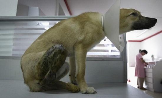 تغريم طبيبة بكندا 5500 دولار بعدما نزعت 19 سنا من فم كلب!