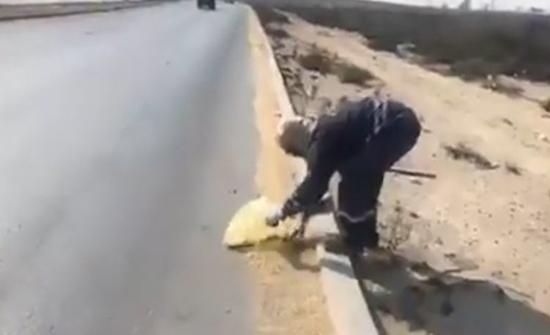 بالفيديو: مشهد إنساني لعامل بالسعودية يجمع شعير من الطريق لإطعام الطيور