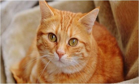 إيقاع أشد العقوبات على قاتل القطط بالغاز المميت في الكويت بعد القبض عليه