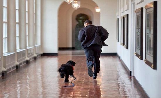 """السرطان ينهي حياة """"بو"""" وعائلة الرئيس أوباما تنعاه"""
