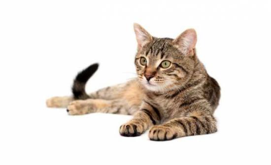 تزيد المناعة وتخفض ضغط الدم..7 فوائد لتربية القطط