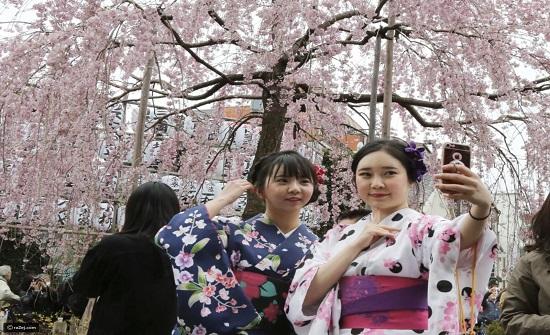 بالصور الرائعة..موسم زهر الكرز اليابان