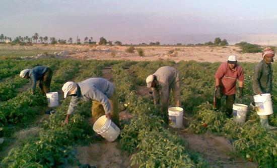الأغوار الجنوبية: مزارعون يطالبون باستراتيجية واضحة للنهوض بالقطاع الزراعي