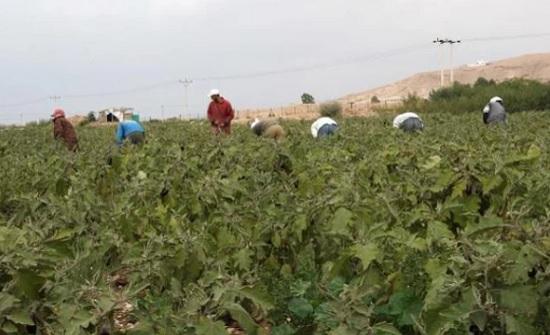 تقرير أممي : الأردن يحتاج إلى استراتيجية تنهض بالقطاع الزراعي