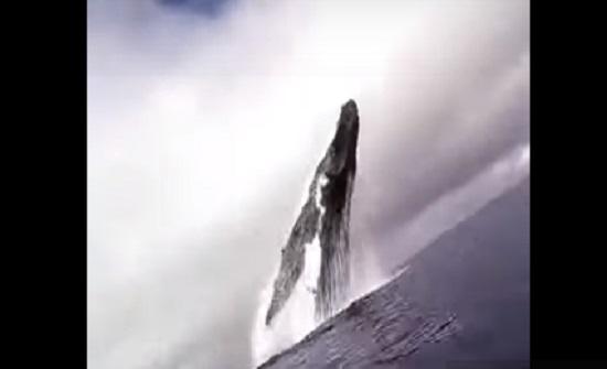 بالفيديو : لقطات نادرة لحوت يقفز ويخترق سطح الماء