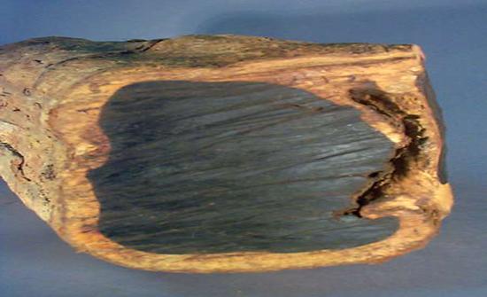 اكتشاف قطعة نادرة من خشب الأبنوس في الصين تعود ل 5000 سنة