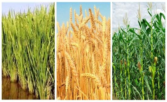 الكرك: توقع إنتاج 14 الف طن من المحاصيل الحقلية
