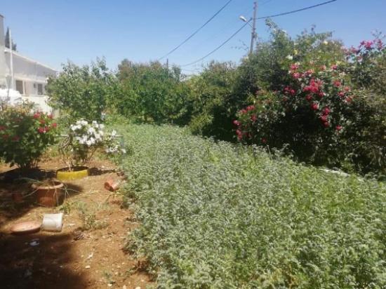 مدير زراعة اربد يدعو لتجهيز الاراضي للزراعات الصيفية