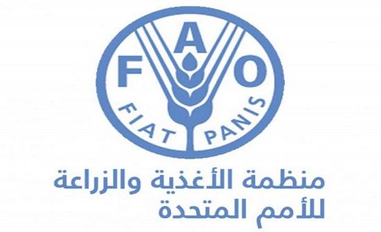 الفاو تطلق برنامج تدريب مدربين على منهاج مدارس المزارعين الحقلية