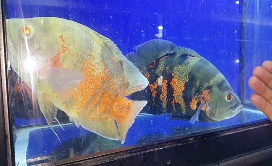 ورشة عمل لمربي الأسماك في الأغوار الجنوبية