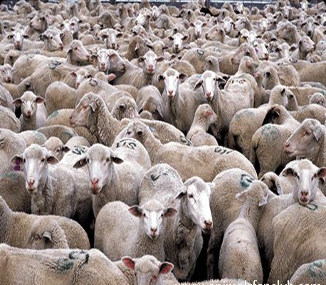 الزراعة تبحث اجراءات استيراد اللحوم الحية من استراليا - المدينة نيوز