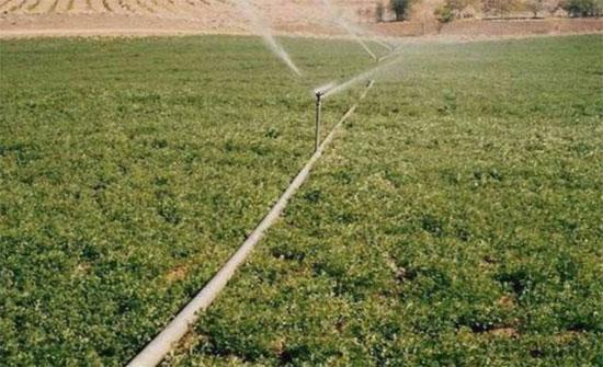 ارتفاع اسعار المنتجين الزراعيين 11 بالمائة