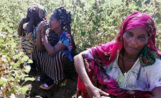 نداء عاجل.. 91% من سكان تيغراي بحاجة لمساعدة طارئة