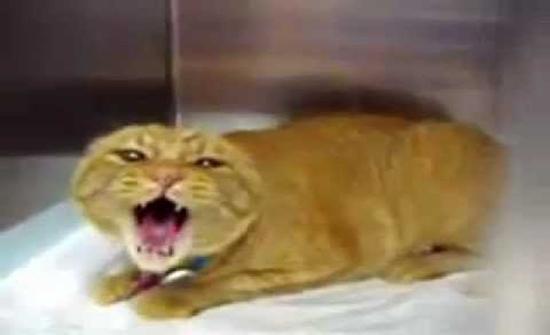 قطة تهاجم ربان طائرة وتجبره على الهبوط في العاصمة السودانية