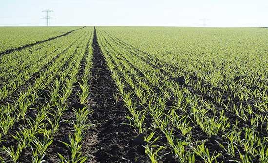 الحنيفات : إطلاق 300 منحة للمزارعين