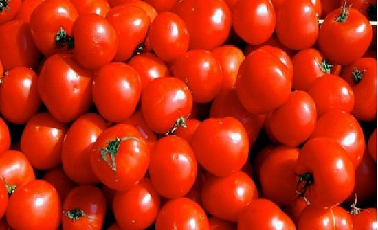 الحنيفات: الحكومة تدعم مزارعي البندورة بمليون دينار للزراعات التصنيعية