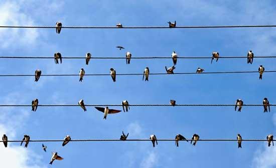 رواشدة : طائر كبير حط على الخط قد يكون سبب انقطاع الكهرباء
