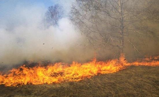إخماد حريق  أعشاب جافة وأشجار مثمرة في اربد