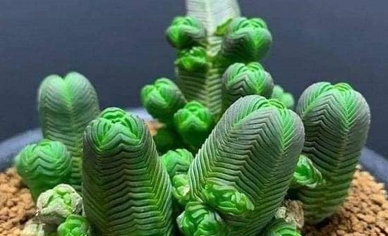 بالصور ... نباتات طبيعية