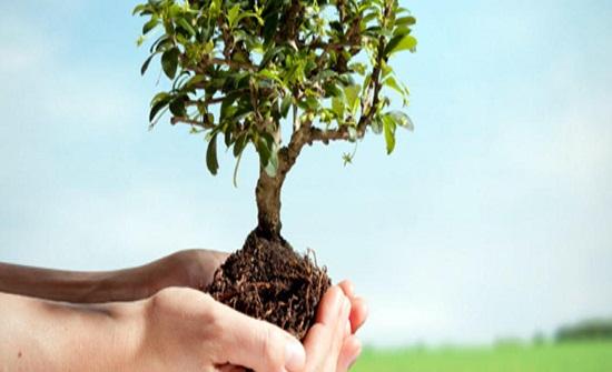 البيئة تكثف جهودها للحد من ظاهرة حرائق الغابات